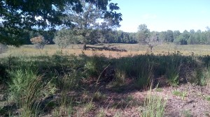 From near the area where the Federals broke across the works first. Looking at the way the federals approached. Notice how when first seen they would have been out of range. When they finally appeared the range would have been fairly close.