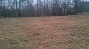 Across the field.